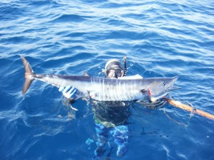 first wahoo freedive spearfishing